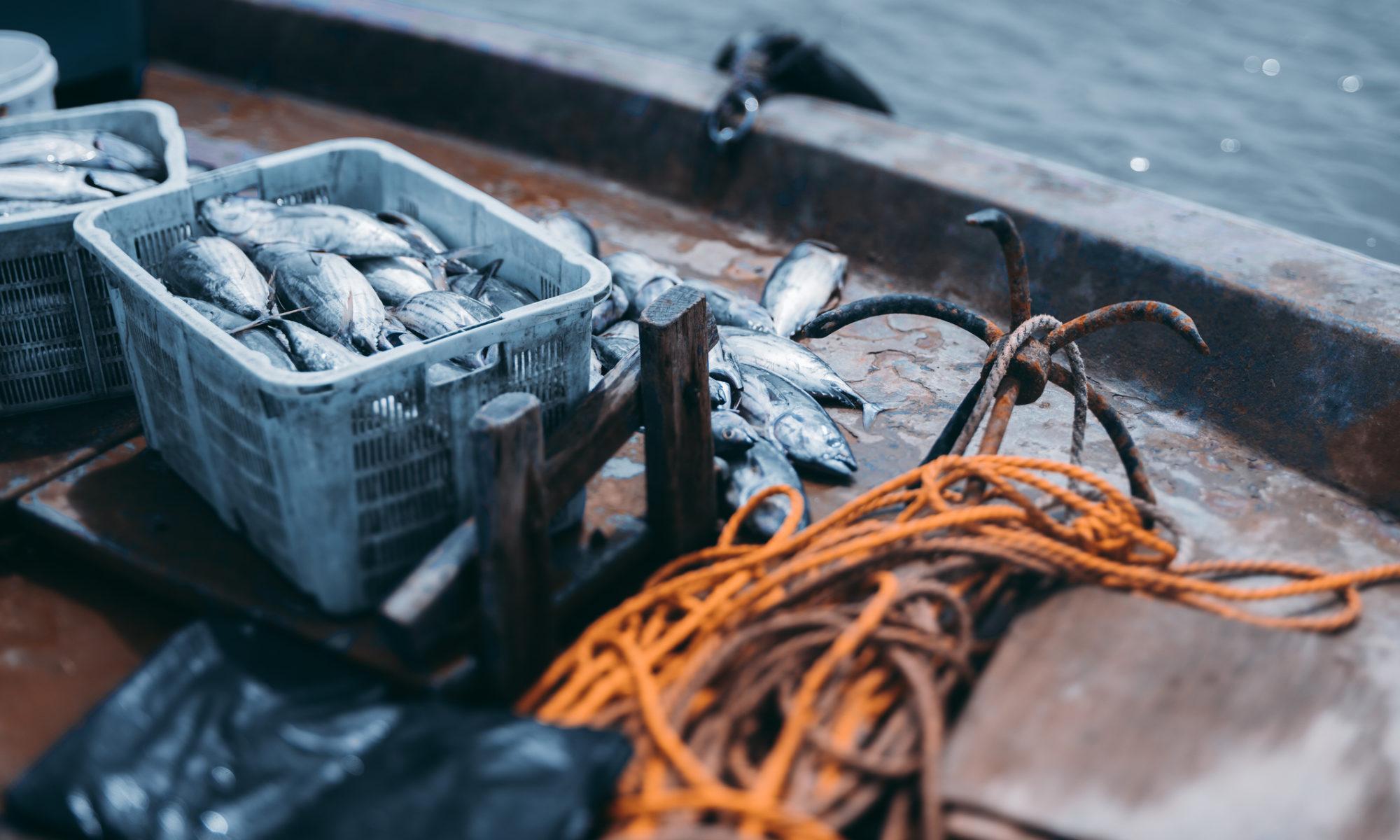 Kompetenz im Handel mit tiefgekühltem Fisch | Flamingo Fisch GmbH & Co. KG Bremerhaven